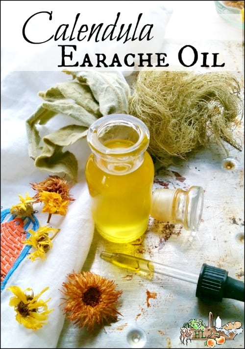 Calendula Earache Oil l Herbal oil for earaches in adults and children l Homestead Lady.com