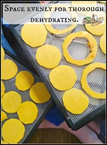 Dehydrating pumpkin l Homestead Lady.com