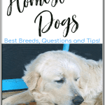 Homestead Dogs: Do You Need a Livestock Guard Dog