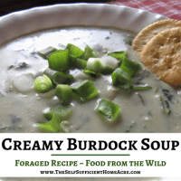 Creamy Burdock Soup Foraging Recipe