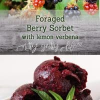 Summer Treats: Foraged Berry Sorbet with Lemon Verbena