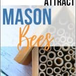 How to Attract Mason Bees to Fruit Trees