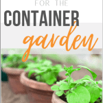 4 Annual Vegetables to Grow in Containers