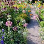 Take an Herb Walk to Learn About Herbs